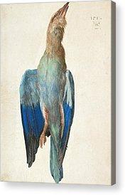 Albrecht Durer Acrylic Prints