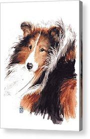 Herding Dog Acrylic Prints