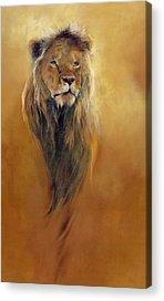 Lion Acrylic Prints