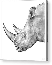 Rhinoceros Drawings Acrylic Prints