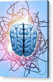 Biomedical Engineering Acrylic Prints