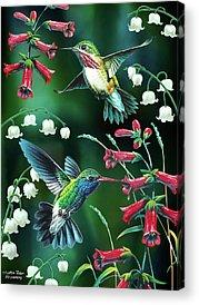 Humming Bird Acrylic Prints
