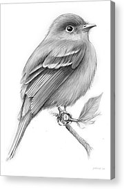 Flycatcher Acrylic Prints