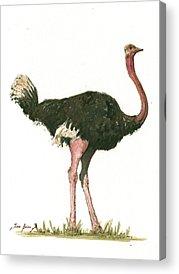 Ostrich Acrylic Prints