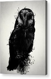 Owls Acrylic Prints