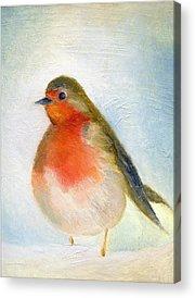 Robin Acrylic Prints