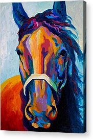 Wild Horse Paintings Acrylic Prints