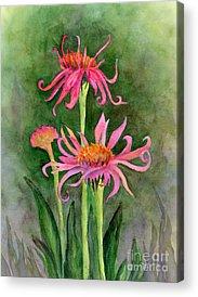 Coneflower Acrylic Prints