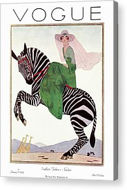 Zebra Acrylic Prints