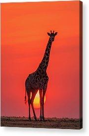 Designs Similar to Sunset Giraffe by Henry Zhao