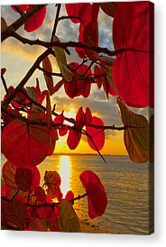 Grape Leaves Photographs Acrylic Prints