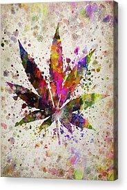 Marijuana Acrylic Prints