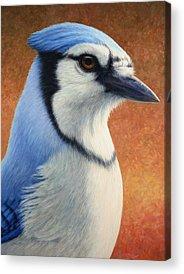 Bluejay Acrylic Prints
