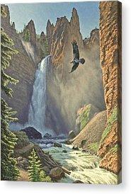 Ospreys Acrylic Prints