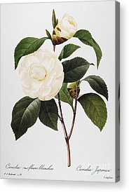 Choix Des Plus Belles Fleurs Photographs Acrylic Prints