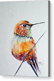 Annas Hummingbirds Acrylic Prints