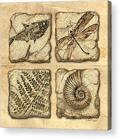 Fossil Acrylic Prints