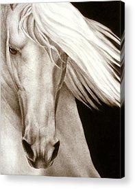 Black Horse Acrylic Prints
