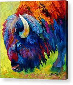 Buffalo Acrylic Prints
