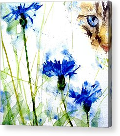 Feline Acrylic Prints