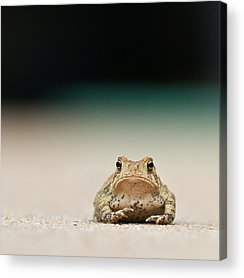 Frogs Acrylic Prints
