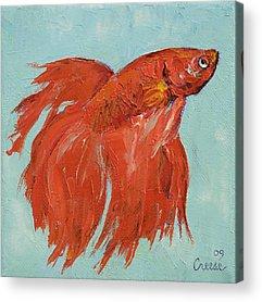 Siamese Fighting Fish Acrylic Prints