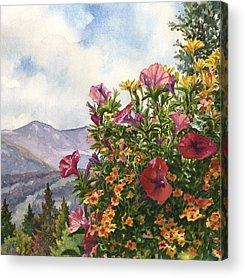 Petunias Acrylic Prints