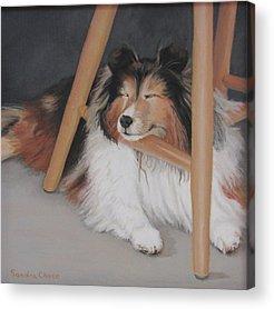 Dog Under Chair Acrylic Prints