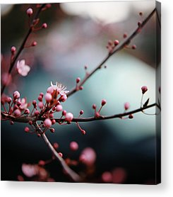 Close Focus Nature Scene Acrylic Prints