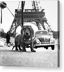 Cute Dogs Acrylic Prints