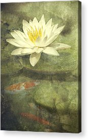 Lily Acrylic Prints