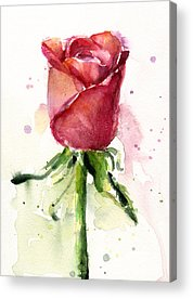 Rose Acrylic Prints