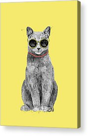Cool Kitten Acrylic Prints