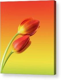 Yellow Flowers Acrylic Prints