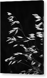 Faa Featured Acrylic Prints