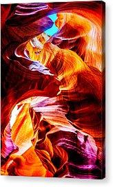 Antelope Acrylic Prints