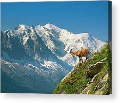 Tour Du Mont Blanc Acrylic Prints
