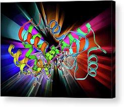 Bacteriophage Acrylic Prints