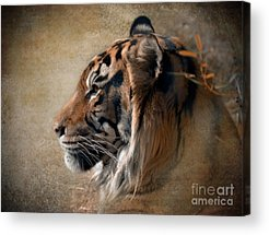 Head Shot Photographs Acrylic Prints