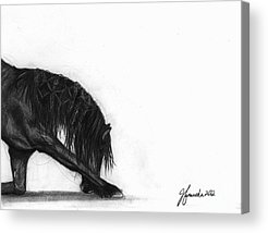 Forelock Drawings Acrylic Prints