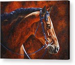 Warmblood Horse Acrylic Prints