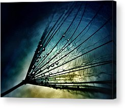 Limited Vision Acrylic Prints