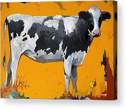 Cow Art Acrylic Prints