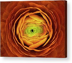 State Flower Acrylic Prints