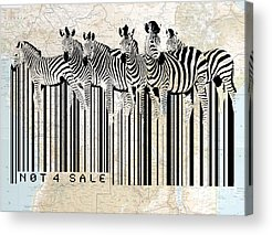 Zebra Digital Art Acrylic Prints