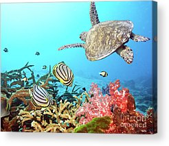 Reef Acrylic Prints