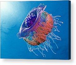 Jelly Acrylic Prints