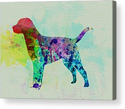 Labrador Retriever Acrylic Prints