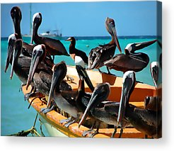 Pelican Acrylic Prints