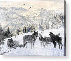 Siberian Husky Acrylic Prints